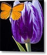 Orange Butterfly On Purple Tulip Metal Print