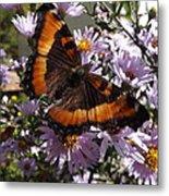 Orange Butterfly/purple Flowers Metal Print