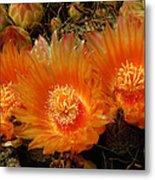 Orange Cactus Metal Print