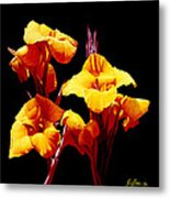 Orange Cannas Metal Print