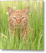 Orange Cat In Green Grass Metal Print