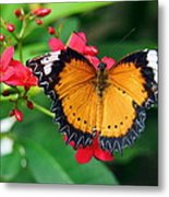 Orange Common Lacewing Butterfly Metal Print