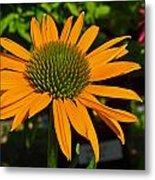 Orange Cone Flower Metal Print