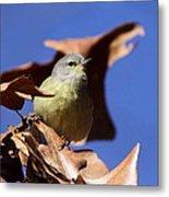 Orange-crowned Warbler - Feather Lite Metal Print