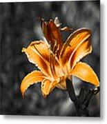 Orange Daylily Flower On Gray 3 Metal Print