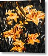 Orange Daylily Flowers On Gray 5 Metal Print