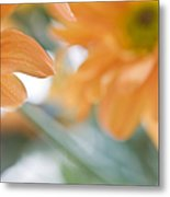 Orange Design. Paintrly Chrysanthemum  Metal Print