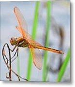 Orange Dragonfly On The Water's Edge Metal Print