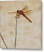Orange Dragonfly Metal Print