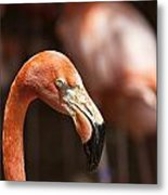 Orange Flamingo Metal Print