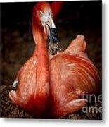 Orange Flamingo Nesting Metal Print