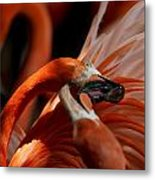 Orange Flamingos Conflict Resolution Metal Print