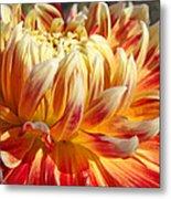 Orange Floral Art Dinner Plate Dahlia Flower Metal Print