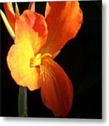 Orange Flower Canna Metal Print