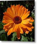 Orange Flower In The Garden Metal Print