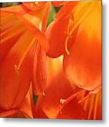 Orange Flower Petals Metal Print