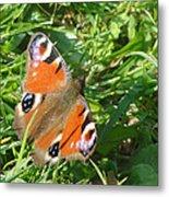 Orange Flutter Metal Print