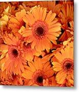 Orange Gerbera Daisies Metal Print