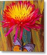 Orange Gray Butterfly On Mum Metal Print