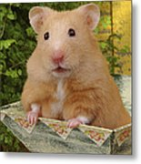 Orange Hamster Ha106 Metal Print