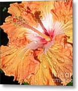 Orange Hibiscus After The Rain Metal Print