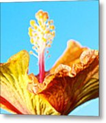 Orange Hibiscus Texture I Metal Print