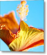 Orange Hibiscus Texture II Metal Print
