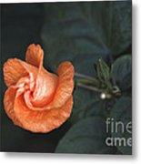 Orange Hibuscus Lax 1 Metal Print
