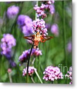 Orange Hummingbird Moth Metal Print