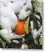 Orange In Snow Metal Print