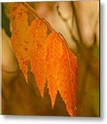Orange Leaves Of Fall Metal Print