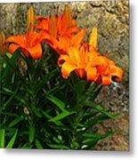 Orange Lilies Metal Print