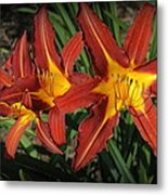 Orange Lillies Metal Print