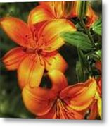 Orange Lillies Metal Print