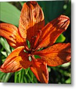 Orange Lilly Metal Print