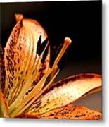 Orange Lily Metal Print