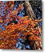 Orange Maple Metal Print