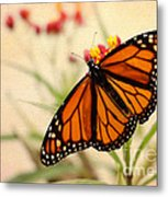 Orange Mariposa Metal Print