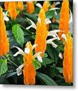 Orange Of Flowers Metal Print