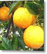 Orange On Tree Metal Print