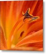 Orange Pollen Metal Print