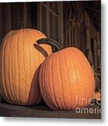 Orange Pumpkins Metal Print