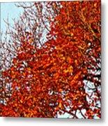 Orange Red Blanket Metal Print