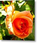 Orange Rose Bloom Metal Print