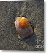 Orange Seashell Metal Print