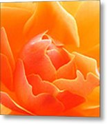 Orange Sherbet Metal Print
