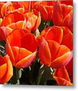 Orange Spring Tulip Flowers Art Prints Metal Print