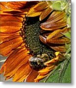 Orange Sunflower And Bee Metal Print