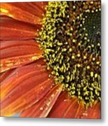 Orange Sunflower Close Up Metal Print