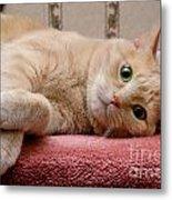 Orange Tabby Cat Lying Down Metal Print